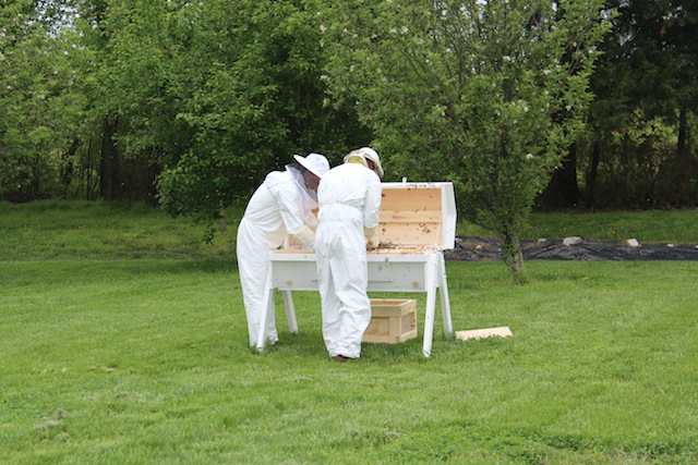 putting in the bees
