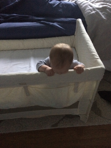chewing on the cosleeper