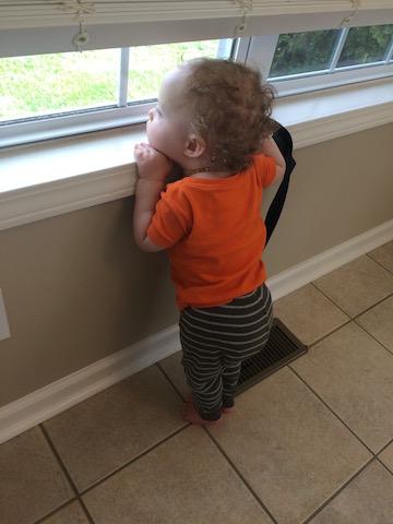 watching bird feeder