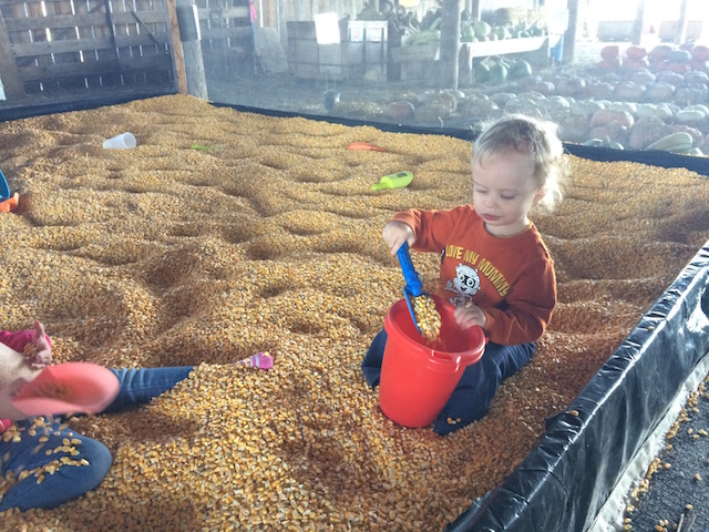 playing in a corn pit
