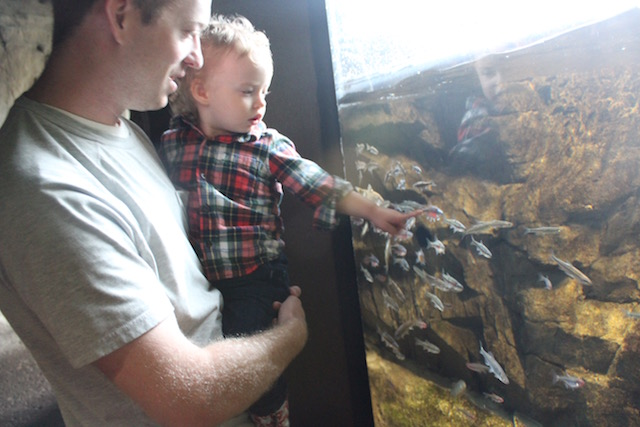 Chattnooga aquarium