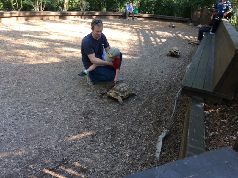 touching a turtle at the Nashville zoo
