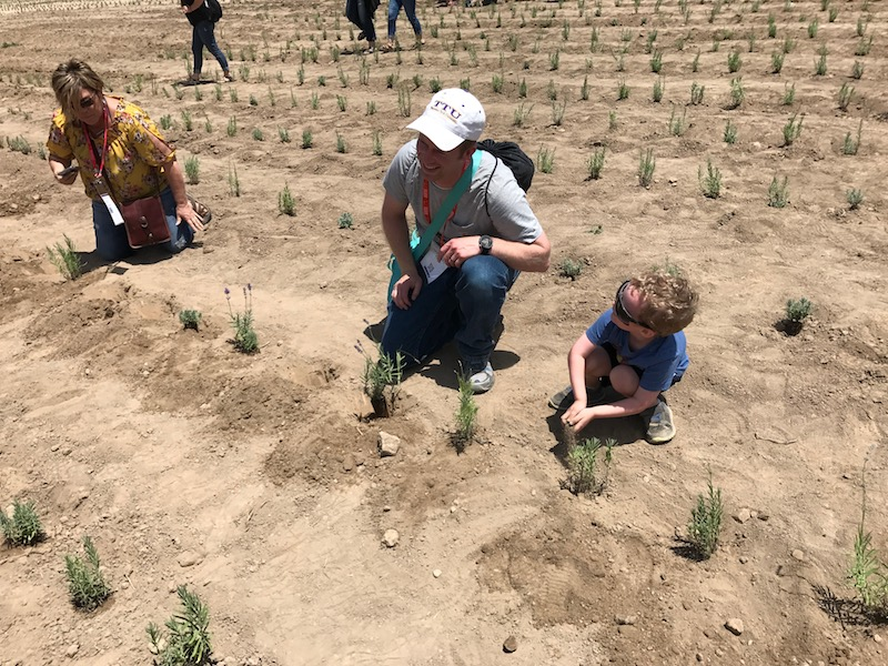 planting lavender at Young Living's farm in Mona, Utah